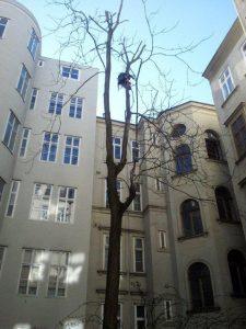Primaverde-Wien-21-Baumschnitt-Strauchschnitt-Gartenpflege 2