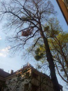 Primaverde-Wien-21-Baumschnitt-Strauchschnitt-Gartenpflege