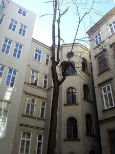Primaverde-Wien-21-Baumschnitt-Strauchschnitt-Gartenpflege 3