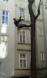 Primaverde-Wien-21-Baumschnitt-Strauchschnitt-Gartenpflege 4
