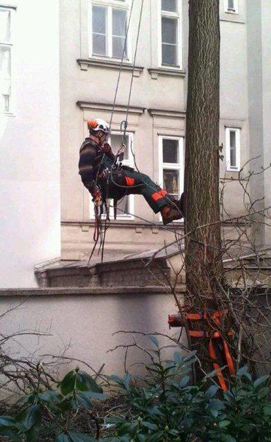 Primaverde-Wien-21-Baumschnitt-Strauchschnitt-Gartenpflege 5