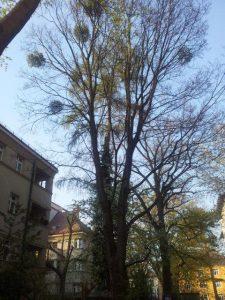 Primaverde-Wien-21-Baumschnitt-Strauchschnitt-Gartenpflege 6