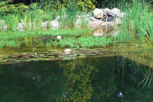 Primaverde-Wien-21-Biotopbau-Schwimmbiotop-Naturteich-Naturpool