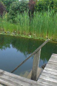 Primaverde-Wien-21-Biotopbau-Schwimmbiotop-Naturteich-Naturpool13
