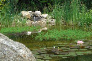 Primaverde-Wien-21-Biotopbau-Schwimmbiotop-Naturteich-Naturpool3