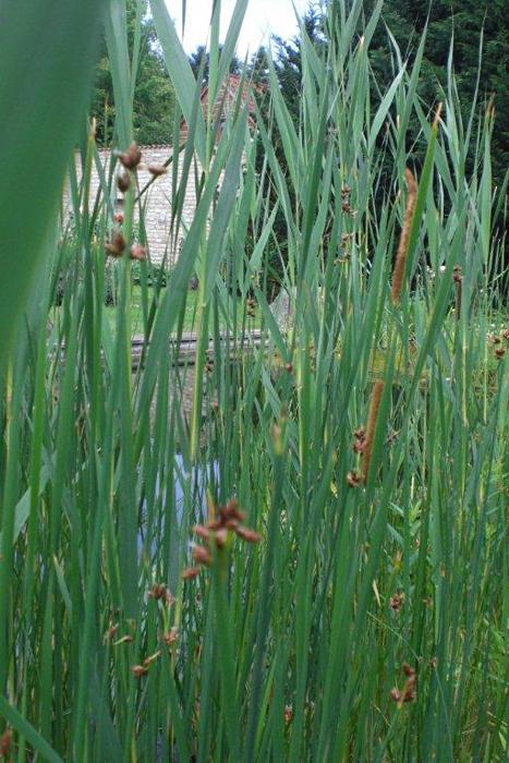 Prima verde gartengestaltung wien biotop und schweimmteich for Naturteich pflanzen