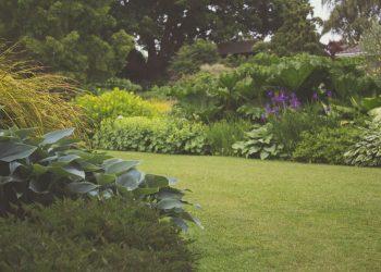 Gartengestaltung-Gartenplanung-Gartenpflege-Primaverde-Wien-21-Floridsdorf-Peter-Dimany(1)