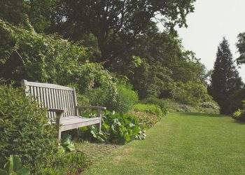 Gartengestaltung-Gartenplanung-Gartenpflege-Primaverde-Wien-21-Floridsdorf-Peter-Dimany(3)