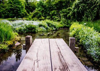 Gartengestaltung-Gartenplanung-Gartenpflege-Primaverde-Wien-21-Floridsdorf-Peter-Dimany(4)