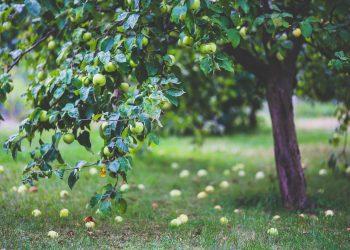 Nutzgarten-Prima-Verde-Gartengestaltung-Peter-Dimany-Wien-Floridsdorf