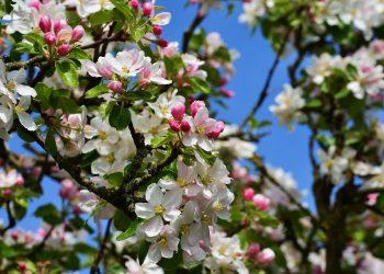 Prima-Verde-Gartengestaltung-Garten-japanischer-Garten