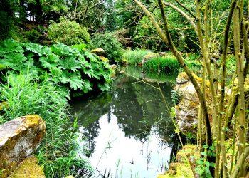 Prima-Verde-Gartengestaltung-Schwimmteich-Biotopbau